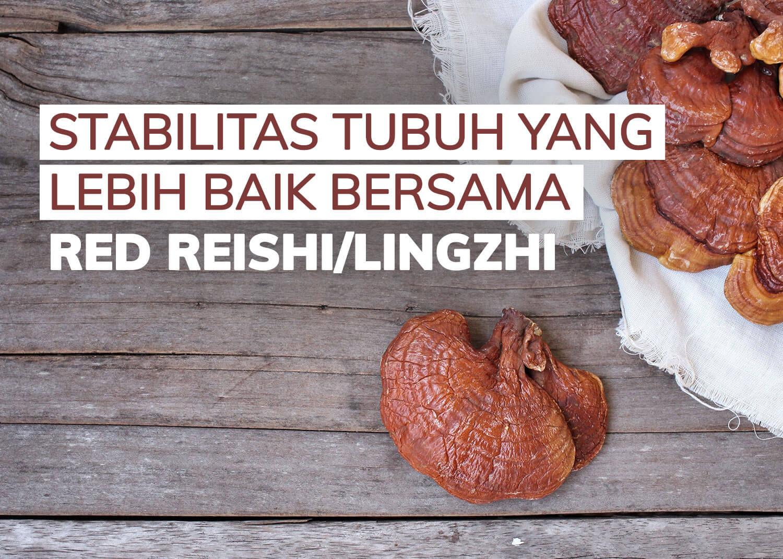 jamur-lingzhi-reishi-suplemen-penambah-stamina