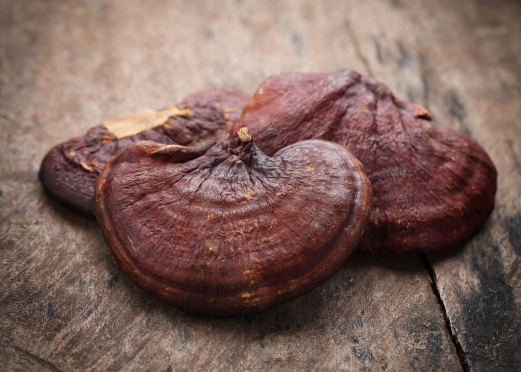 manfaat-jamur-lingzhi